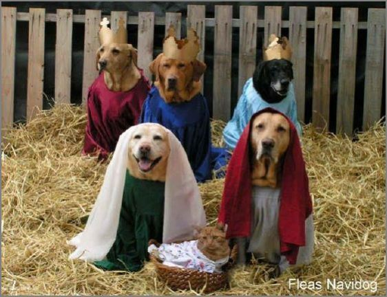 hap mon, dogs play christmas