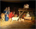 nativity, live