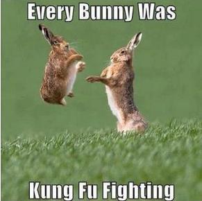 every bunny
