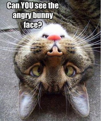 angry bunny face