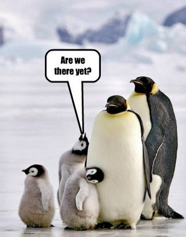 are we there yet penguins
