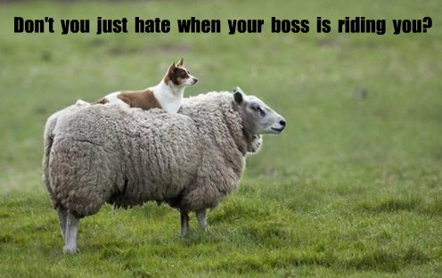 boss riding you