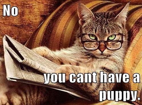 no puppy