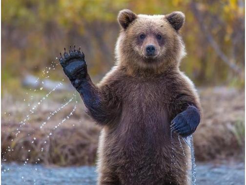bye bye bear