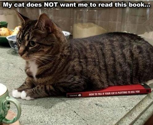 cat plots