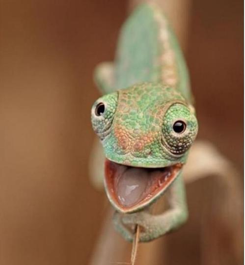 one in chameleon