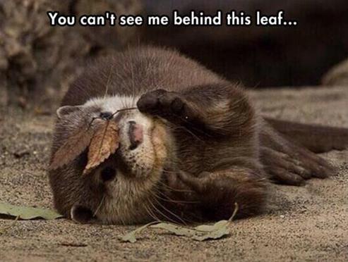 leaf otter