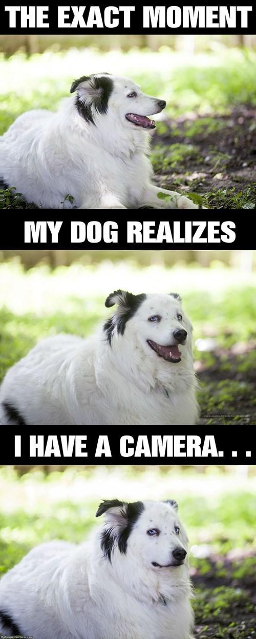 dog pics