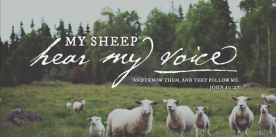 sheep, shepherd