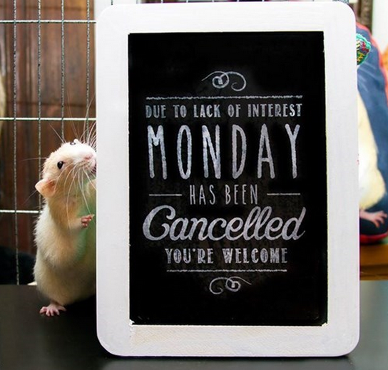 Monday cancelled