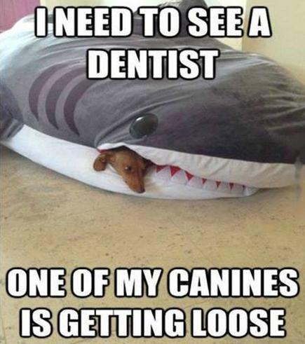 loose canine