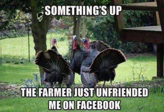 turkey and the farmer