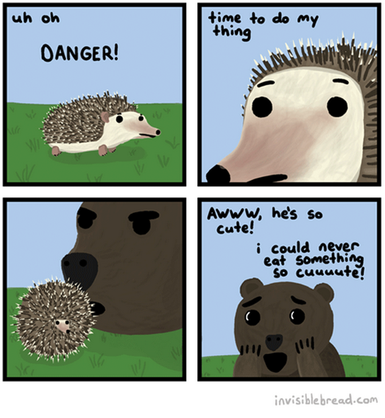 what hedgehogs do