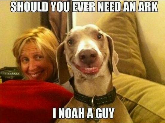 Noah guy