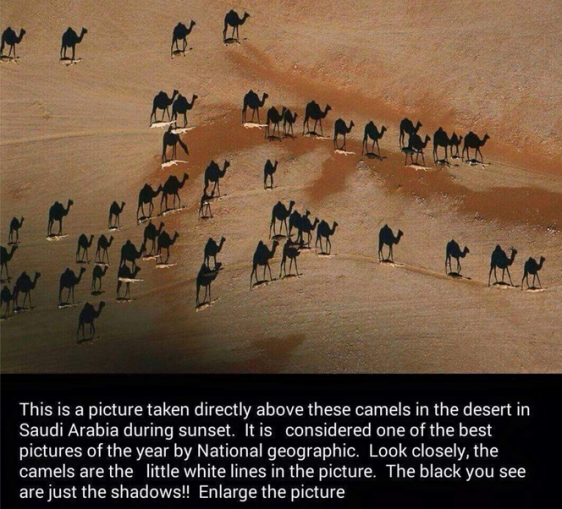 awesome camels