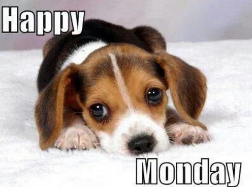 happy monday puppy
