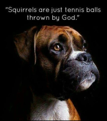 tennis-anyone